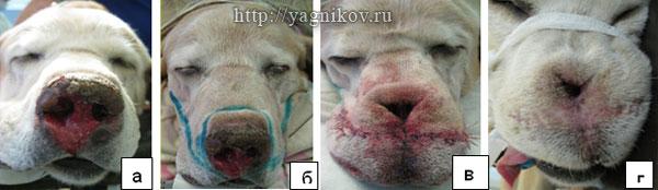 Плоскоклеточный рак носового зеркала собаки