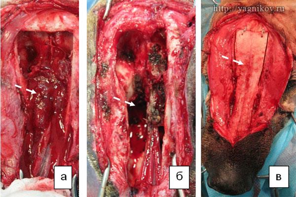 Этапы операции у собаки с опухолью правого носового хода