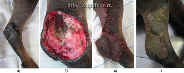 Собака: Опухоль кожи мягких тканей