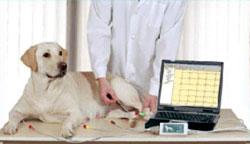 диагностика сердечных заболеваний собак и кошек