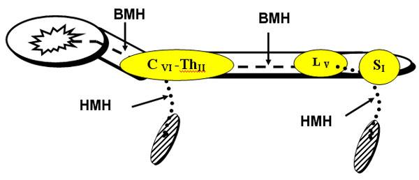 Схематическое изображение двигательного невронов